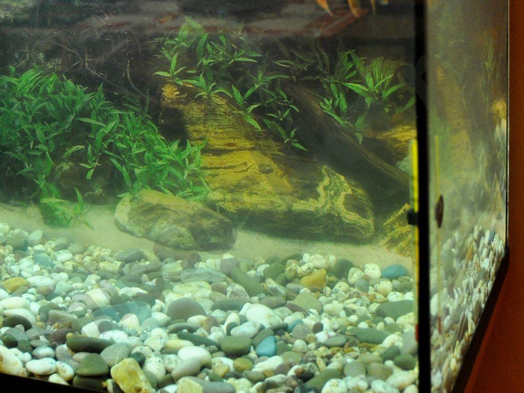Плавниковая гниль лечение аквариумных рыб